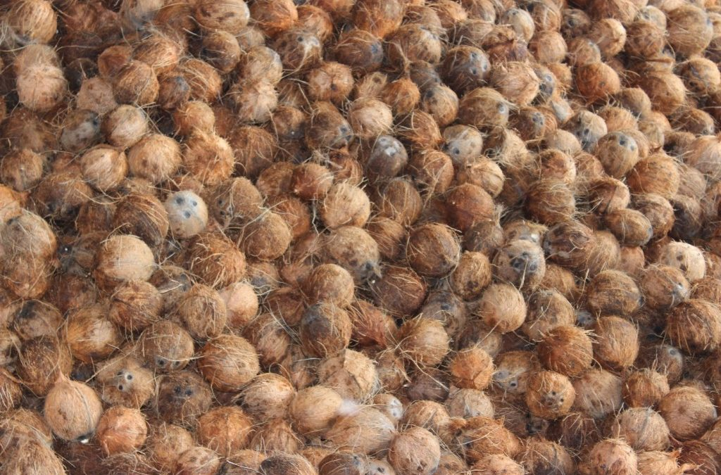 Support Brands like MELT Sourcing Fair Trade Organic Virgin Coconut Oil
