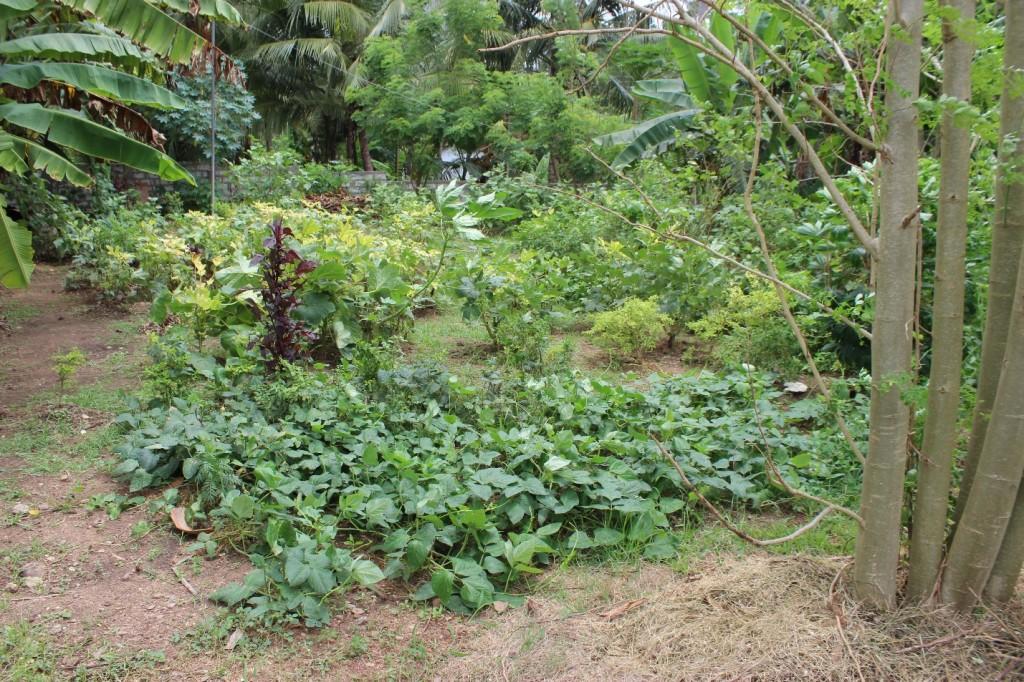dr-bronner-vegetable-garden-1024x682