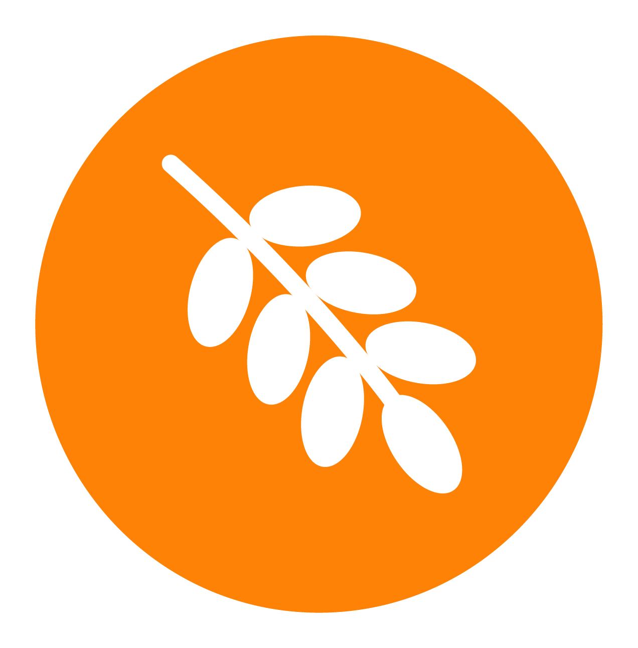 Organic Palm Fruit Oil
